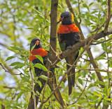 Unusual Parrots