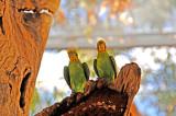 Pair of Unique Parrots