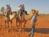 Camel Rides for Rent