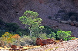 Incredible Green Trees in Desert Areas