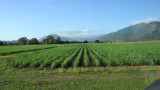 Lovely Green Agricultural Fields on Way