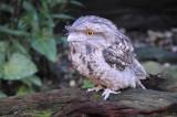 Owl-Type Bird