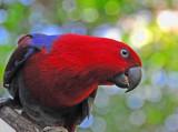 Beautiful Parrot (Female!)