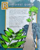 Rainforest Giants