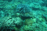 Another View of Coral