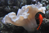 White Coral and Red Fish