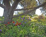 A Return to Fullerton Arboretum