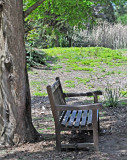 A shady place for a welcomed bench