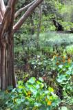 Tree providing shade for nearby plants