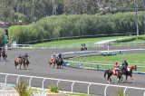 Horses for First Race Walk Toward Starting Gate
