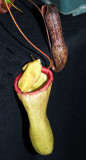 Insect Carnivore Plant, -8-