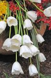 White Bells, -2-