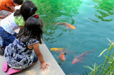 Three young children looking at the koi fish