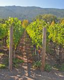 Vineyards of Winery