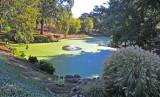 Pond With Type of Algae, Joseph Phelps Winery