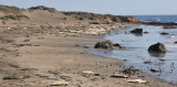 Elephant Seals Sunning Themselves