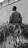 Faces of Egypt:  Carrying sugar cane.