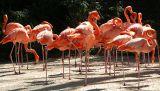 Dancing Class; San Diego Zoo, CA