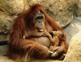 Feeding Time!; L.A. Zoo, CA