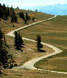 S Curve!; Near White Mountains, CA
