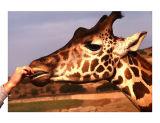 Love a Snack!; S.D. Animal Park, CA