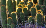 Cacti Highlighted!