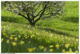 GERARDMER.Spring Scenery