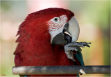 Parrot Creator of COLORS