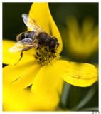 BIBI3 in Yellow Flower 2