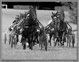 A day at VITTEL for Horses Race_Courses Hippiques à VITTEL