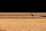 An Heron