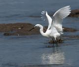LESCONIL.Egret in the Harbor III