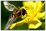 BIBI in Yellow Flower