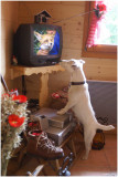 Michka watches the TV  and follows the explanation on the life of the fox.