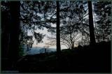 GERARDMER.NEAR NIGHT MOOD in FOREST