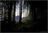 GERARDMER.NEAR NIGHT MOOD in FOREST II