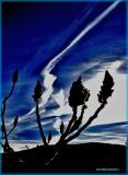 BLUE SKY JET FUSING  VINAIGRIER