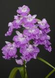 Ponerorchis graminifolia 15
