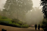 Mist at Doi Tung