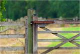 A gate in the rain