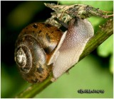 SNAILS, SLUGS AND OTHER CRITTERS