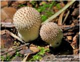Fungi50