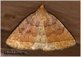 Yellowish Zanclognatha Moth Zanclognatha marcidilinea #8352