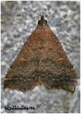 Smoky Tetanolita  MothTetanolita mynesalis #8366