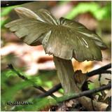 Fungi30