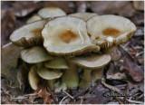 Fungi31