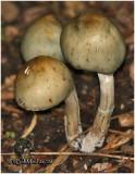 Fungi33