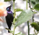 Home-Garden_12-5-2012 (41).JPG