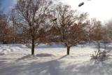 snow-jan08-02.jpg