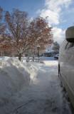 snow-jan08-04.jpg